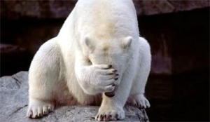 polarbear-facepalm-sml